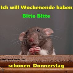 Photo of Donnerstag
