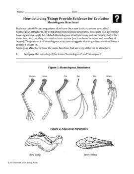 Evolution Homologous And Vestigial Structures Compare Contrast