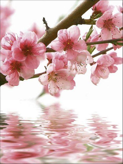 Artland Glasbild A Yakusheva Pfirsichbluten Reflektieren