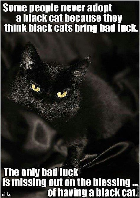 .I've owned a total of four black cats in my life (not counting my foster kitty, who is the mother to my three black girls) and every one has been a real blessing. Besides, any fashionista knows if you want true beauty, you have to go with basic black.