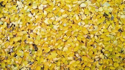 autumn 55 отметок «Нравится», 3...