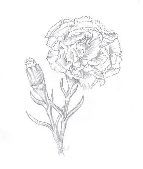 Carnation Flower Stamp Png Google Search Cizimler Cizilecek Seyler Cizim
