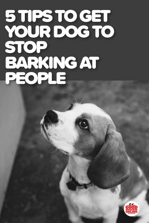 How To Get A Dog To Stop Barking At Me