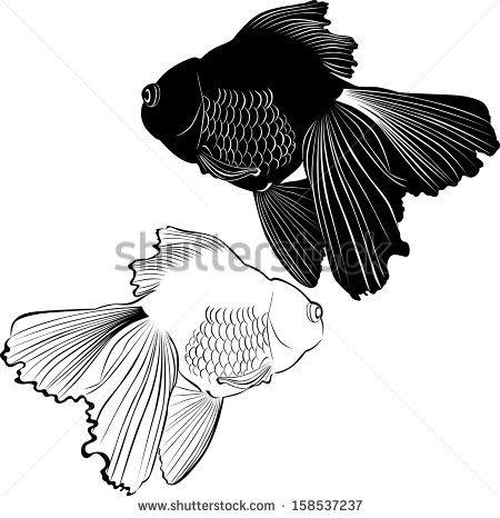 Goldfish Carp ปลา