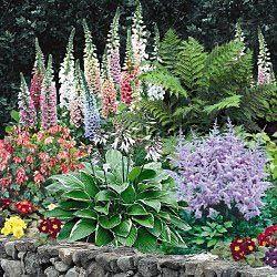 Shade loving perennials:Fern, Hosta, Astilbe, Primula, Foxglove and Coralbells
