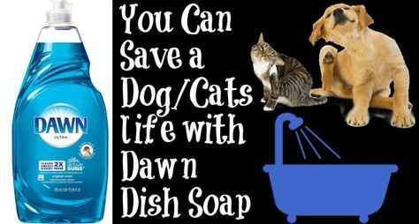 Save A Dog Cats Life With Dawn Dish Soap Cleaan Cat Fleas