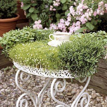 Miniatur Garten mit Kräutern auf einem Servierbrett