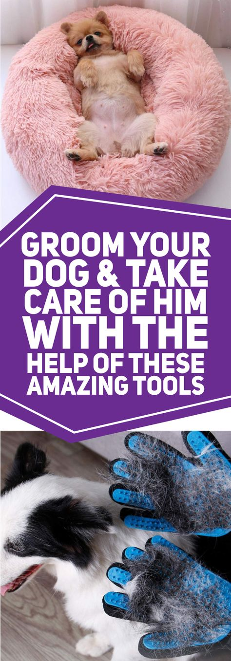 The dogs are man's best friends and keep secrets. No doubt, if you have one such little pup, you are the luckiest person on this planet. Get handy gadgets for them and have a great life.