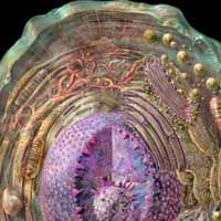 Animal Cell Interactiv Zoology Pinterest Cell Structure