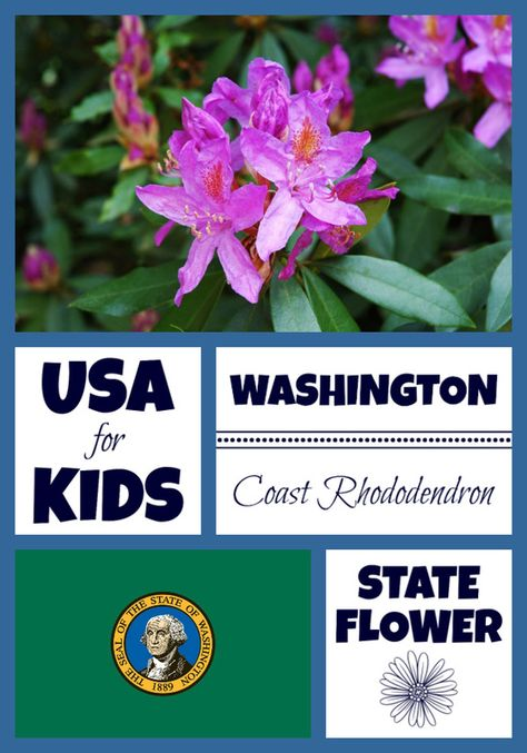 Washington State Flower Flower Coloring Pages Usa Facts Facts