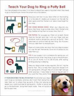 House Training A Puppy For Dummies And Clicker Training Multiple