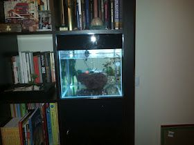 Ikea Hack Bookshelf Into Aquarium Ikea Hackers Ikea Glass Store