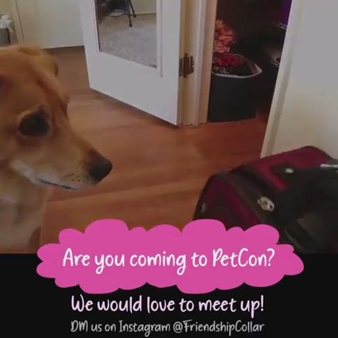 Verified Are you going to Petcon this weekend? Sound on & watch us pack! We would love love love to meet up! DM us if you are going to be there! #friendshipcollar