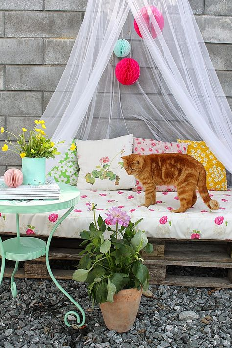 kitty on the outdoor seating