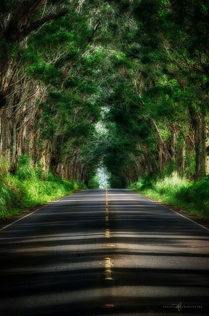 The \'Tunnel of Trees\' on Kauai is one of the most unique drives in Hawaii.