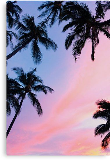 Beautiful Pink Sunset Palm Trees Artwork Design Millions Of Unique Designs By Independent A Sunset Iphone Wallpaper Wallpaper Iphone Summer Preppy Wallpaper Beautiful palm tree wallpaper for