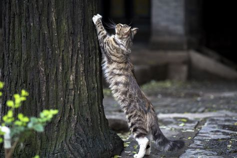Born Free: Making Life Safer For Outdoor Cats