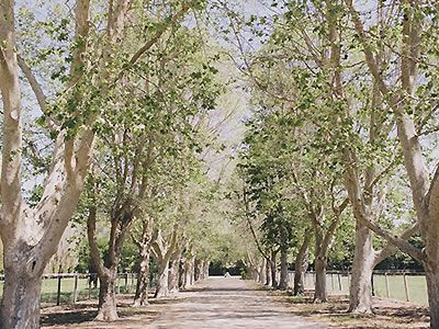Whispering Rose Ranch Private Estate Wedding Santa Barbara County Venues Solvang 93463 Out In The Garden Pinterest