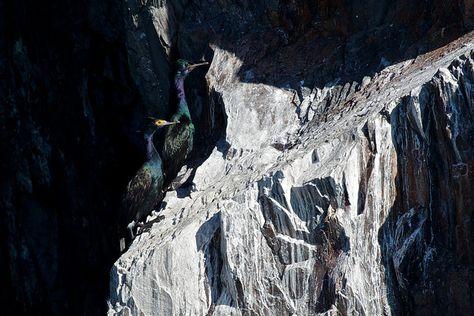 Cormorants in Kenai Fjords National Park