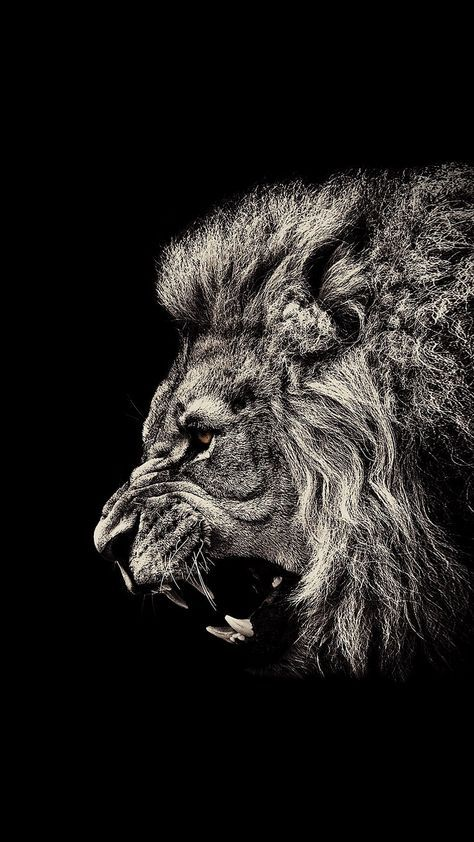 Black Wallpaper Iphone Lion Black Amoled 1080x1920 Need Iphone S Plus Background For Iphones Wallpap Lion Wallpaper Lion Wallpaper Iphone Dark Wallpaper Iphone Best of black wallpaper for iphone lion