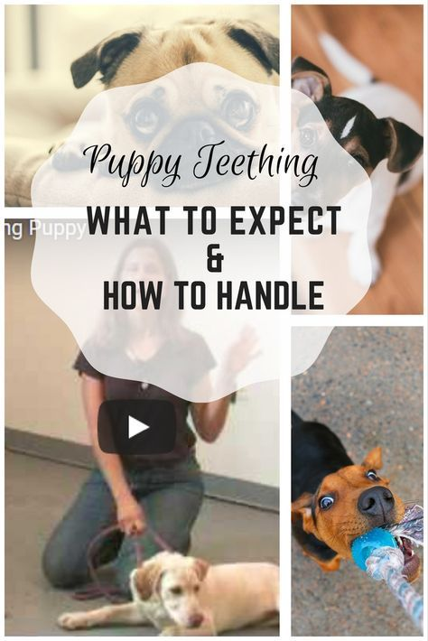 Puppy Teething What To Expect With A Teething Dog Tips