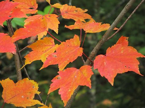According to the calendar, one day it's summer and the next it's fall. Nature marks the change of the season a little differently.