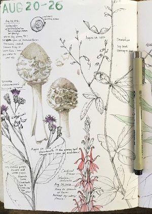 Botany And Journaling With Lara Call Gastinger Lewis Ginter Botanical Garden Nature Journal Nature Sketch Botanical Sketchbook