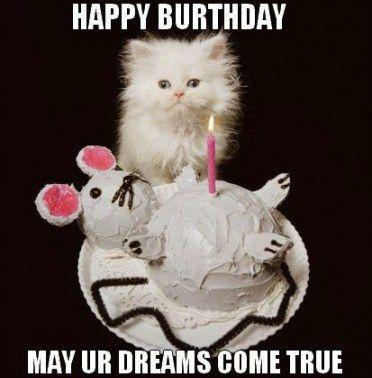 Funny Happy Birthday Cat Kitty 62 New Ideas Funny Birthday