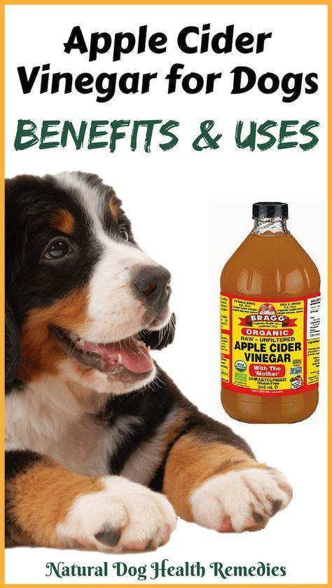 Apple Cider Vinegar For Dogs Apple Cider Benefits Apple Cider Vinegar Remedies Canine Health