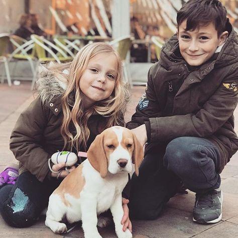❤️ Mes amours prennent tellement de plaisir à partager ces nouveaux moments de bonheur ❤️Nana commence à apprécier les promenades en famille et marche de mieux en mieux en laisse !  ___________________________________________________ @mathys_gaming #family #love #babydog #beagle #nana #instapic #latelierderoxane #teamgourmandise #jevousaime