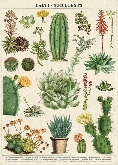 Papier Cadeau Cavallini Avec Cactus Et Plantes Grasses Gravures