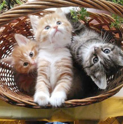 A Cats Work Is Never Done Cats Kittens Cutest Cute Animals