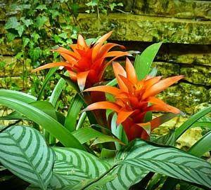 Best 18 Amazon Rainforest Plants Flowers Updated Amazon