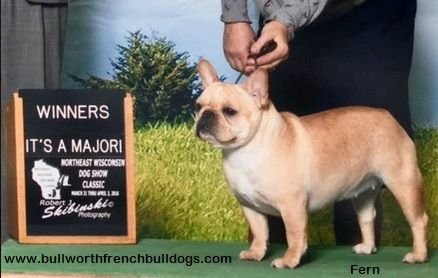 Pin On Bullworth French Bulldogs Dams