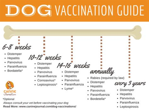 Dog Vaccination Guide & Everything You Need to Know About Vaccinating Your Dogs