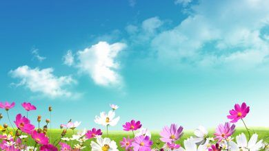 Spring Desktop Backgrounds Spring Wallpaper Hd