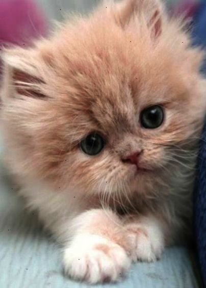Cool Cats And Kittens For Sale In Cornwall Kittens Cutest Pretty Cats Cute Animals