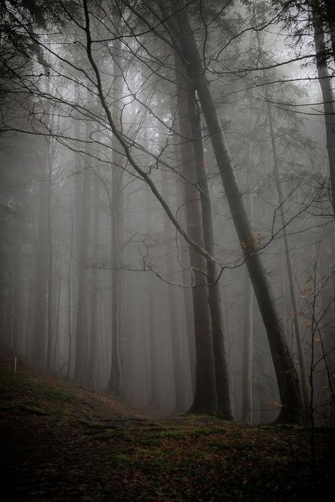 Trees are Brilliant ~Twelve - the big tree society