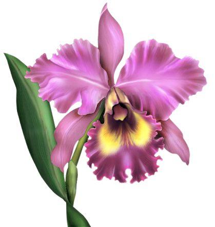 Fleurs Orchidee Fleur Orchidee Orchidee Et Peinture Fleurs