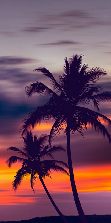 Palm trees purple sunset by fred bahurlet (wamdesign - Fondos de pantalla - Wallpaper