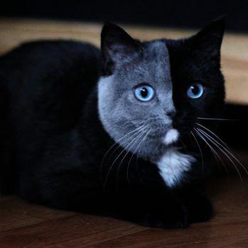 Hello Kitty Adorable Kitten Kittens Cutest Pretty Cats
