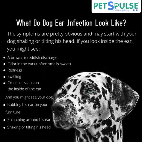 swelling What Do Dog Ear Infections...