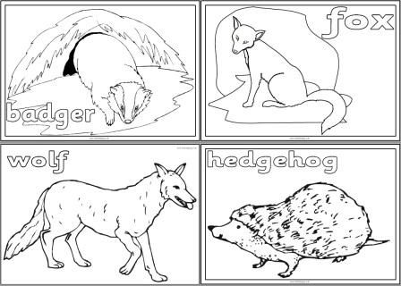 European Animals Colouring Pages Avec Images