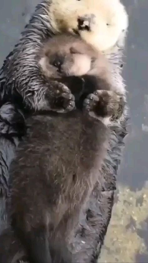 Awww 😍 #cute #animals #adorable