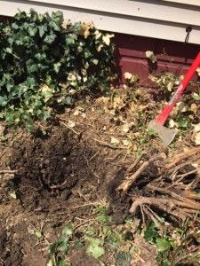 How To Remove A Shrub Stump: A Step By Step Guide #landscaping #DIY