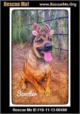 Florida Black Mouth Cur Rescue Adoptions Rescue Me Black Mouth Cur Black Mouth Cur Dog Adoption