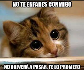 Tarjetas De Amor Para Pedir Perdon Meme Gato Memes De Gatos Divertidos Loca De Los Gatos