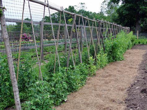 Le Nouveau Treillis De Pois Etait Un Excellent Ajout A Mon Jardin