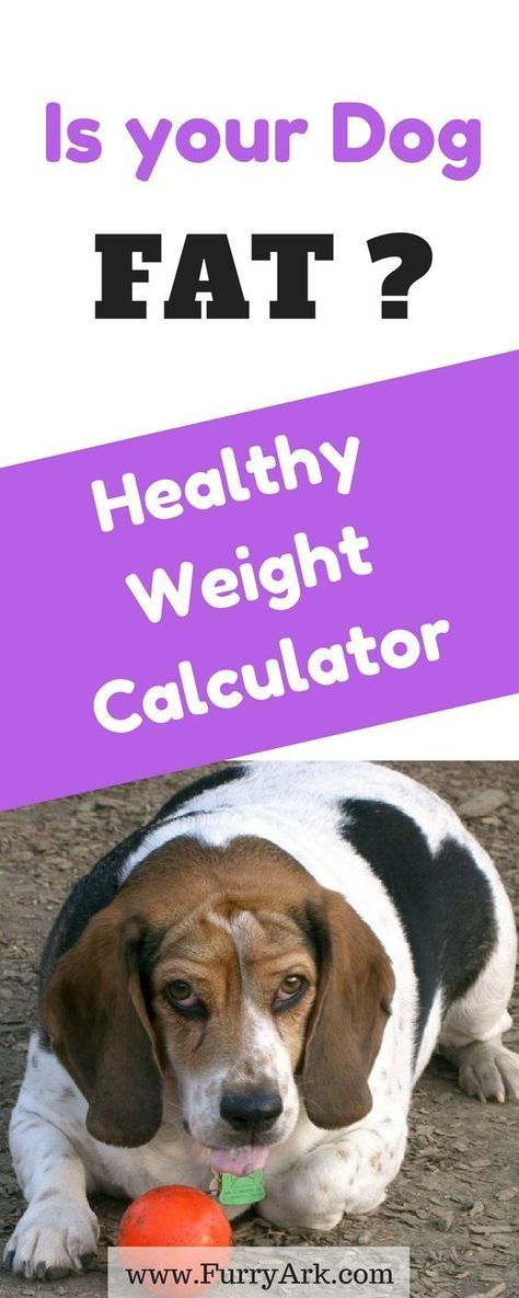 Is My Dog Overweight Easy And Quickly Charts To Know It Dogs