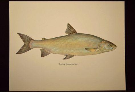 Fishing Wall Art Fish Print Fishing Decor Cabin Lake Trout   Nature ...